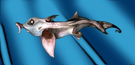 Hydrolagus 22