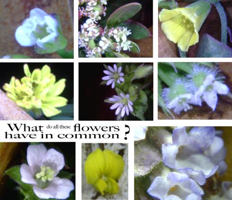 Tiney Flower 35