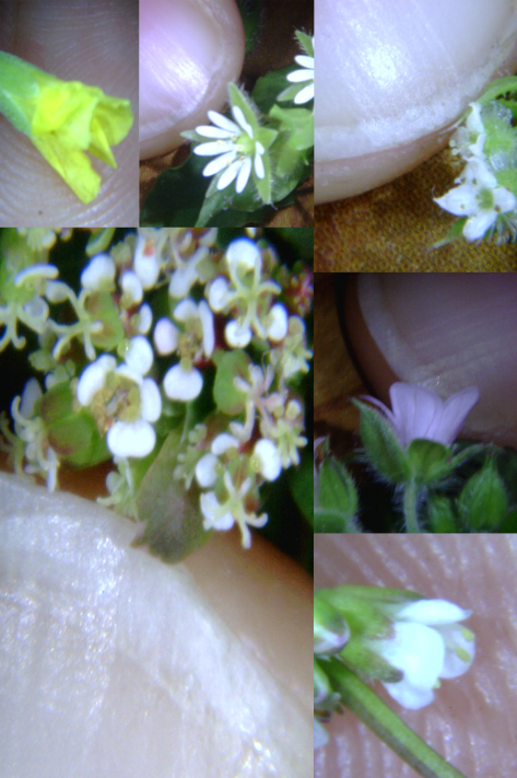 Tiney Flower 36
