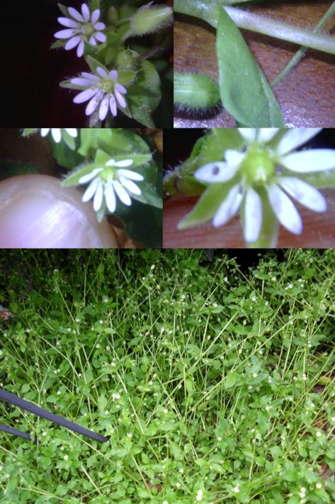 Tiney Flower 38