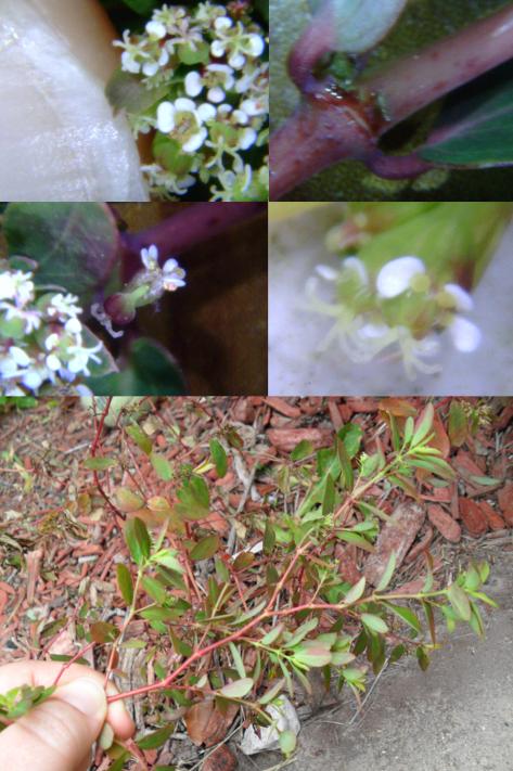 Tiney Flower 39