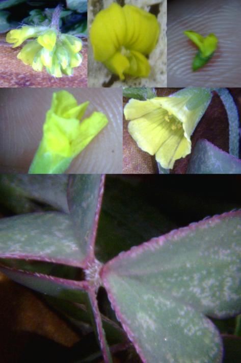 Tiney flower 40
