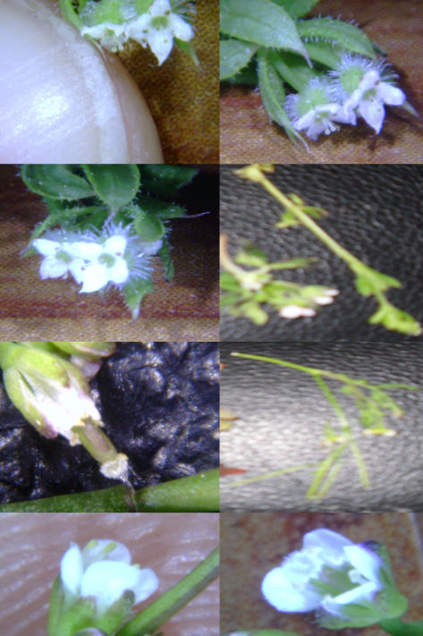 Tiney Flower 41