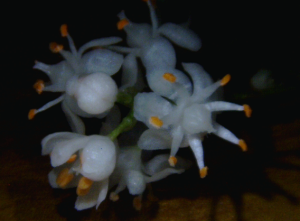 Fern flowers